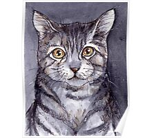 Gray Tabby Cat Poster