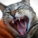 The Ferocity of a Yawn by Mikell Herrick