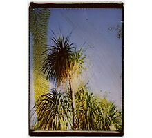 tropic Photographic Print