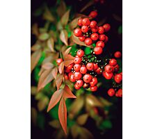 Cluster of Berries Photographic Print