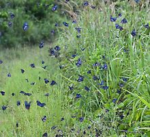 Blue Butterfly Frenzy by lifeinfineart