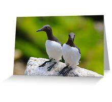 Guillemots, Saltee Island, County Wexford, Ireland Greeting Card