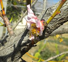 Peach Tree with a Bee by Fabs35618