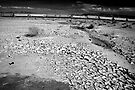 After the Rains Go, the Dried Mud Cracks  by Corri Gryting Gutzman
