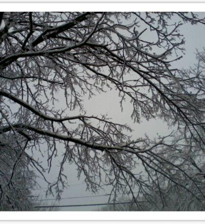 Trees of White Sticker