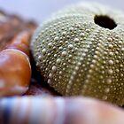 Seashell Still-life by HaleyRenee