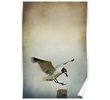 A Seagull's Landing Poster