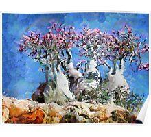Socotra trees Poster