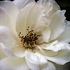 Rose White. by Bette Devine
