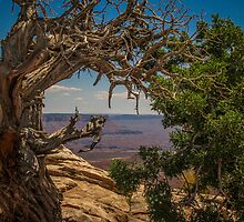 Looking at the canyon by Robert Hollo