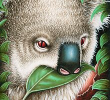 Koala Munching a Leaf Birthday Card by Lorna Mulligan