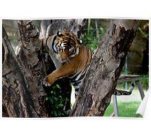 Tree Tiger Poster
