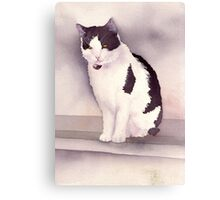 White and black cat Canvas Print