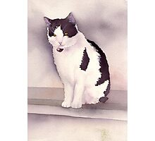 White and black cat Photographic Print
