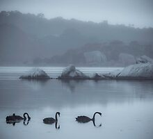 Inlet Swans March 2014 by pennyswork