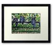 Shiraz on the Vine Framed Print