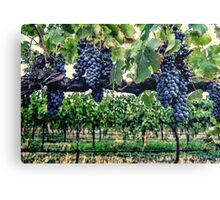 Shiraz on the Vine Canvas Print