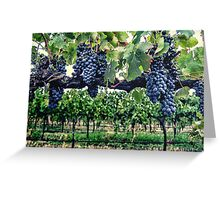 Shiraz on the Vine Greeting Card