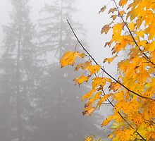 Yellow, autumn leaves in a misty mountain by Robert Hollo