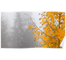 Yellow, autumn leaves in a misty mountain Poster