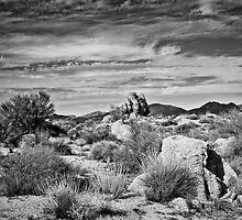 Bountiful Sonoran  Desert in Black and White by Lee Craig
