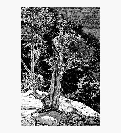 Living on the Edge in Black and White Photographic Print
