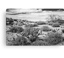 Sonoran Desert Song in Black and White Canvas Print