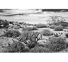 Sonoran Desert Song in Black and White Photographic Print