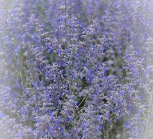 Bursting Blues of Springtime by designingjudy