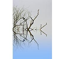 Magpie Photographic Print