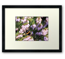 Heather is so sweet Framed Print
