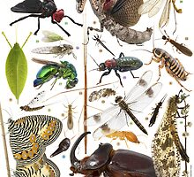 Insects of Gorongosa National Park, Mozambique by Naskrecki