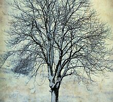 A Tree in Winter-Monterosi, Italy by Deborah Downes