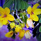 Splendid yellow flowers by ?? B. Randi Bailey
