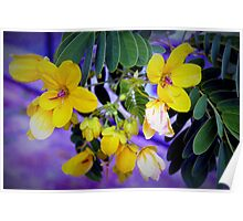 Splendid yellow flowers Poster