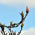 Magnolia Branch by lynn carter