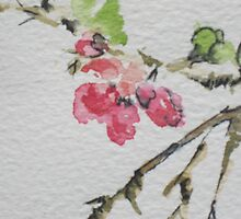 Flowering Quince by kest standley