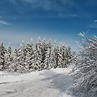 Snowy Country Lane by Lois  Bryan