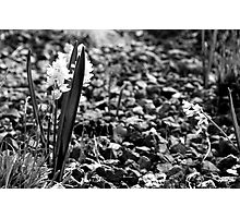 Flowers & Rocks (B&W) Photographic Print