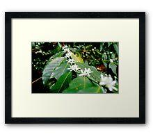 Coffee Flowers (Mexico) Framed Print