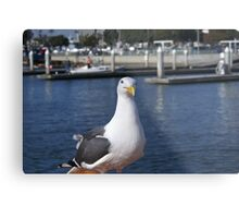 Patiently waiting; Pacific Dawn Sport Fishing; Ventura, CA Metal Print