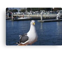 Patiently waiting; Pacific Dawn Sport Fishing; Ventura, CA Canvas Print