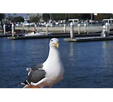 Patiently waiting; Pacific Dawn Sport Fishing; Ventura, CA Photographic Print