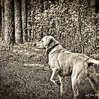 Hunting Dog HDR by Jeff Ore