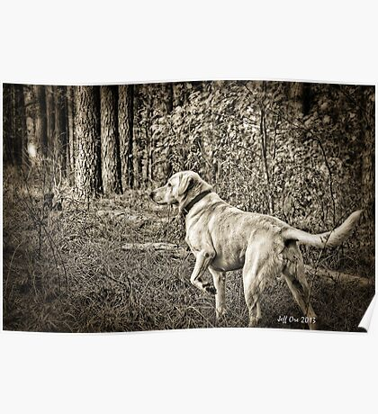 Hunting Dog HDR Poster