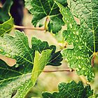 Vine Leaves by yolanda