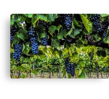 Shiraz 2014 Canvas Print