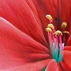 Beautiful Flower Closeup by Erik Anderson