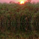 Sunset over the papyrus, Okavango Delta, Botswana by Margaret  Hyde