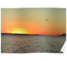 Golden Gate Pelican Sunset Poster
